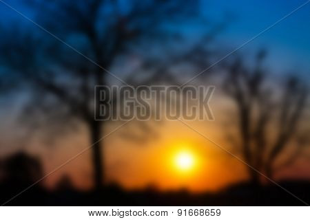 Silhouettes of trees at sunset, blurred background