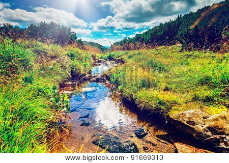 Alpine stream on summer mountain ravine (Ukraine, Chornogora Ridge, Carpathian Mountains).