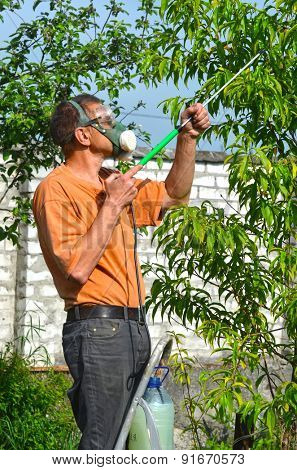 Man spraying tree in the garden