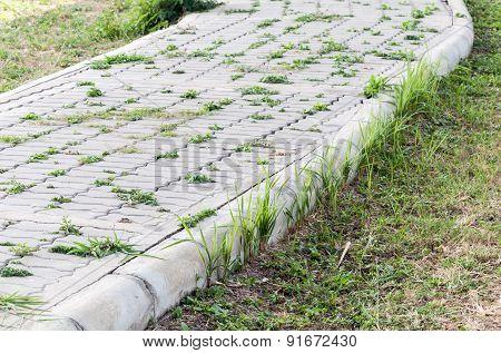 Natural Brick Path