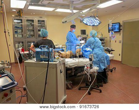Lioness Surgery
