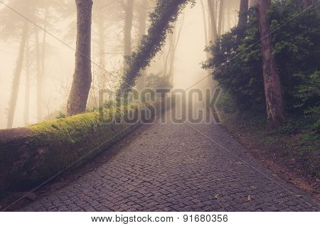 Road through a golden forest with fog and warm light.