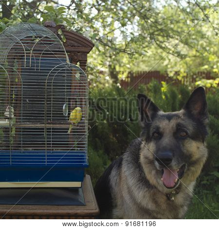 Bird Cage With A Budgie