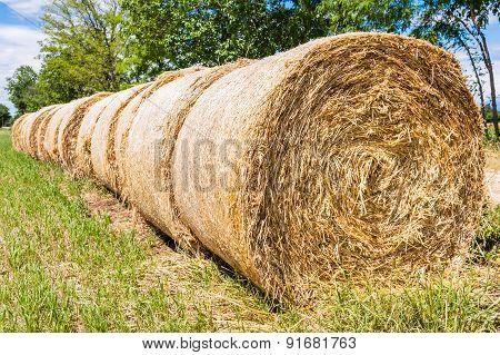 Hay Bales In Row
