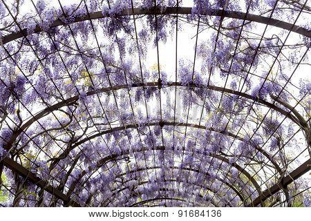 Schonbrunn Palace Purple Gardens