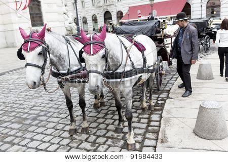 Horse Drawn Carriage Michaelerplatz