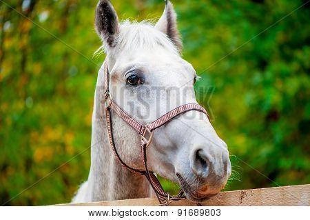 Face A Horse Looking At The Camera Close-up