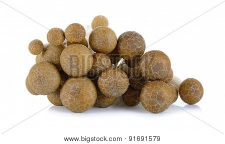 Brown Beech Mushroom Isolated On The White Background