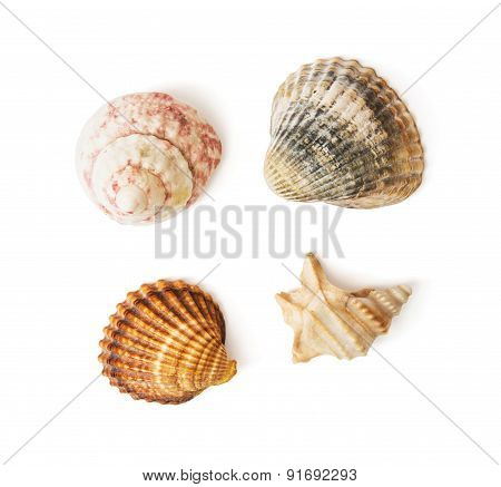 Mix Of Sea Shells