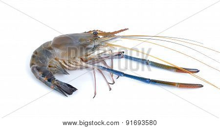 Fresh Shrimp Isolated On The White Background
