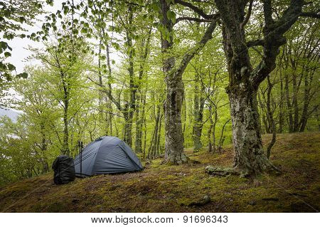 Tent In The Spring Forest