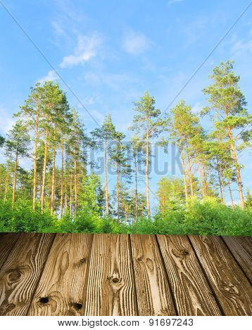 Pine Forest With Boards Concept