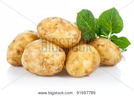 New potatoes with green leaves. Isolated on white background