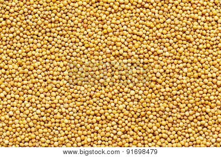 Raw yellow coloured mustard seeds background