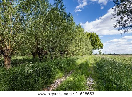 Overgrown Old Path In A Rural Area