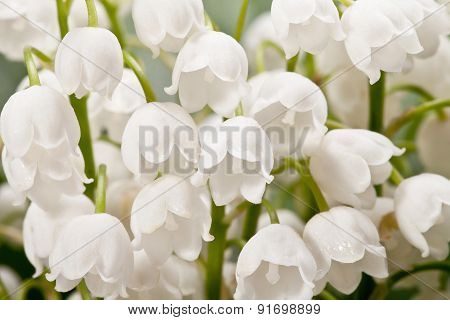 Bouqet Of Springtime Flowers  Convallaria Close Up