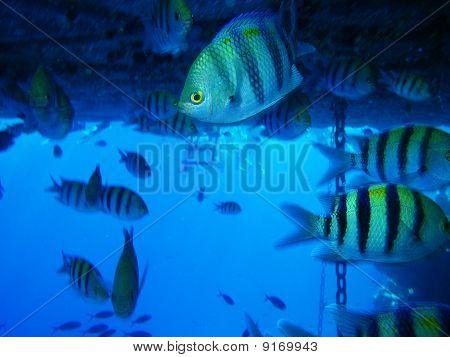 Jamb Of Fish