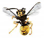 stock photo of hornet  - hornet isolated on a white back ground - JPG