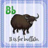 stock photo of letter b  - Flashcard letter B is for buffalo - JPG