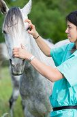 stock photo of great horse  - Veterinary great performing a scan to a young mare  - JPG