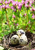 picture of bird egg  - Nest with bird eggs over flowers background - JPG