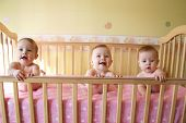 picture of triplets  - little baby girls in crib together - triplets