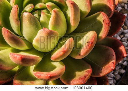 Up Close View Of A Succulent
