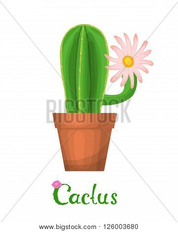 Cactus plant with flowers. Blooming cactus on a pot. Vector illustration