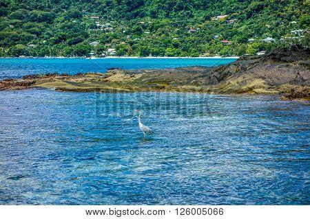 Rocks on the beach in Mahe Seychelles main island