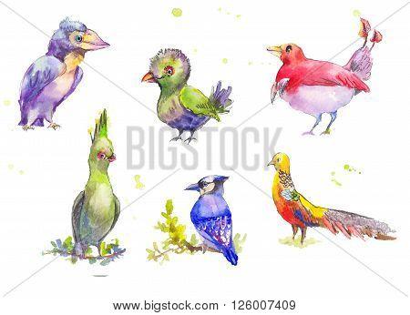 Fantastic birds watercolor set. Tropical fantastic set of multicolored birds in watercolor painting. Watercolor sketch of fantastic birds.