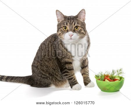 Fat grey cat and salad isolated on white