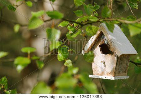 Little Birdhouse in Spring birch leaves