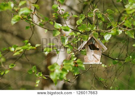 Little Birdhouse in Spring new birch leaves