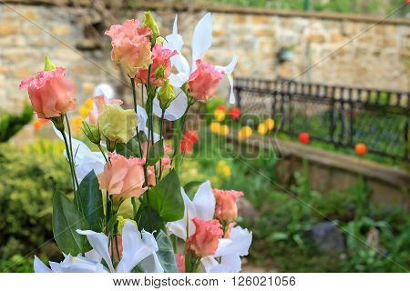 Closeup of rose bouquet in springtime garden