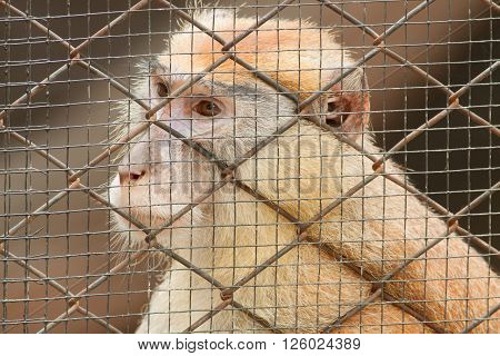 The monkey in the cage at the zoo