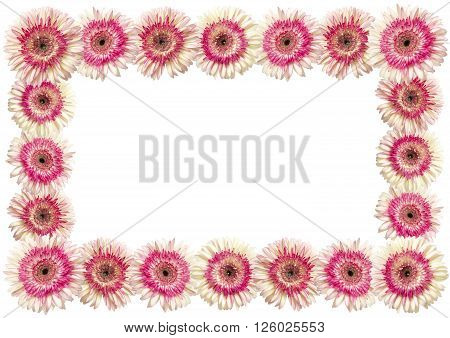 White And Magenta Gerbera Frame