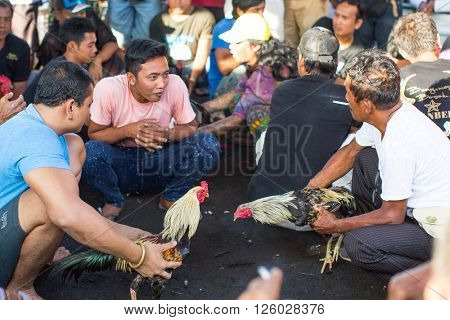 BALI, INDONESIA - FEB 23, 2016: Locals during traditional cockfighting. Cockfighting is a very old tradition in Bali and religious aspects of cockfighting within Balinese Hinduism remain protected.