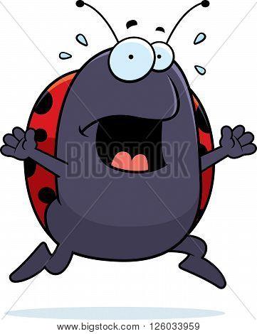 Ladybug Panic