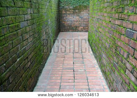 SELANGOR, MALAYSIA -JUNE 04, 2015: Walkways made of clay brick and clay brick surface was covered with green moss