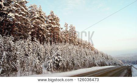 Asphalt road through the winter forest .