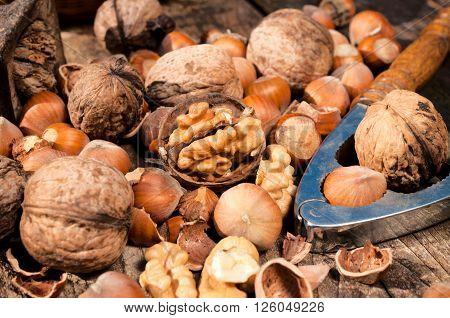 Hazelnut And Walnut