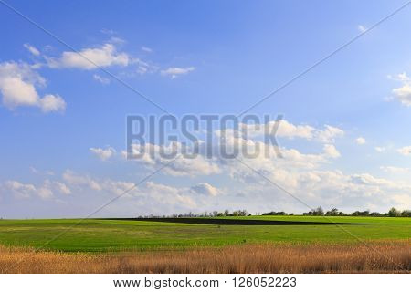 Background image of lush green field under blue sky and white clouds