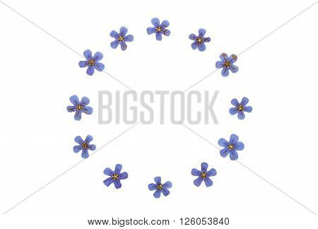 Pressed and dried flower brunnera macrophylla. Isolated on white background. ** Note: Soft Focus at 100%, best at smaller sizes