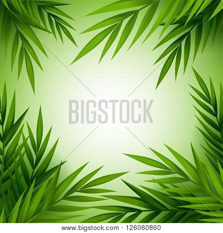 Tropical palm tree background. Green jungle leaves frame . Vector card with copy space.