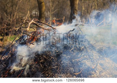 Blazing campfire in nature pile of ashes outdoors