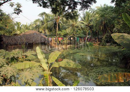 BAIDYAPUR, INDIA - DECEMBER 01: Bengali village December 01, 2012 in Baidyapur, India.