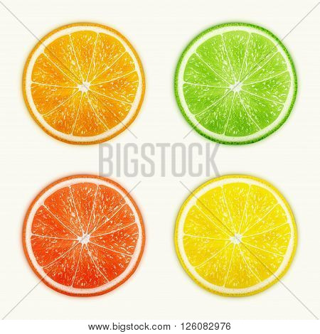 Set of citrus fruits. Orange Lime Grapefruit Lemon. eps10 vector illustration