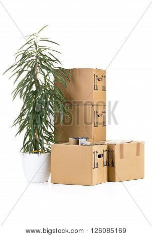 Stack of moving carton boxes with plant over white background