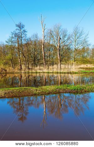 landscape with reed along a floodplain in The Netherlands
