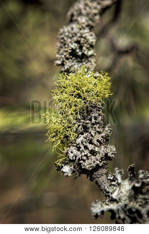 A layer of moss and lichen cover this small branch.